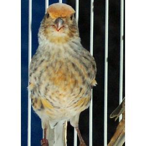 RED BIRD PRODUCTS, Inc  - BIRD LEG BANDS - PLASTIC